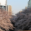 #043 高戸橋から望む桜(2017.04.04)