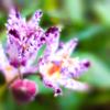 朝の冷たき風に咲く 小さき花の命の歌に