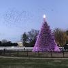 ワシントンDC クリスマスツリーめぐり2020