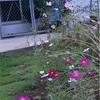 最近の草っ原お庭の様子
