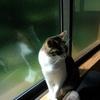 窓に映るトラ模様、小説更新♪