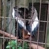 ヘビ友さんと上野動物園