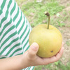 シャキシャキ梨がうまい!「フルーツパーク陽平」で梨狩りを堪能してきました【滋賀県・竜王町】