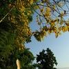 根岸線209系 黄葉
