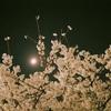 夜桜お散歩