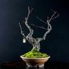 熊柳(クマヤナギ)という盆栽