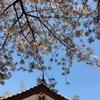 【思考】ぜんぶ春のせいだ。