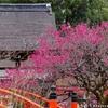 下鴨神社の梅