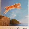 猫の本紹介