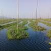 インレー湖の環境保護活動を、いろいろ紹介するよ!