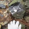 勝浦町で化石採集 自然を満喫しましたが、思わぬトラブル発生でピンチに