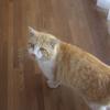 ノラ猫ダイちゃん、区長さんに住猫認定される