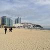 韓国釜山、海雲台をうろついてうさぎを眺める旅