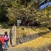 熊本・阿蘇 秋深く 観光客、紅葉満喫