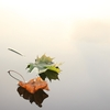 秋を彩る旬の食材。 日本料理の季節感を表す四季と「走り、旬、名残(なごり)」とは?