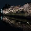 岡崎疏水の桜のライトアップ