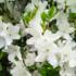 琴子のイメージが、純白の花のようでした。「ちびねこ亭の思い出ごはん」 #感想 #読了 ( @ruri03291 さん)