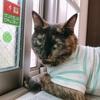 【猫】ちょこちゃんは空気清浄機が好き?