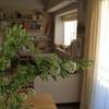 「1000円で実現!部屋に春の訪れを感じさせてくれる花・インテリア」