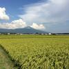 畦畔の草刈りと原田マハ『キネマの神様』