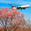 世界の航空会社とサクラを撮る。さくらの山公園・後編【2018.3.26】
