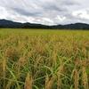 【写真】新潟の稲作と蕎麦|LuxyArt