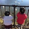 娘2歳児、順調にイヤイヤ期のピークに達する
