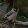2020年2月22日の鳥撮り(2/2)-さいたま市