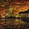二本松市・霞ヶ城公園で紅葉を愛でてきました!【福島の紅葉スポット】