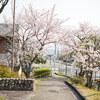 地元の桜めぐり Part2 (4月4日編) Ⅰ