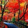 養老公園の紅葉行ってきました。ライトアップは今週末まで。