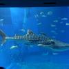 美ら海水族館の生き物たち