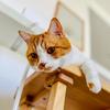 【猫学】猫と暮らすにはどれくらいお金がかかるの?わがやの事例をシェアします。