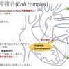 心室中隔欠損+大動脈縮窄+大動脈弁(もしくは弁下)狭窄の複合疾患について CoA complex(大動脈縮窄複合)  CoA complexについて  疾患29