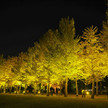 EOS M5で暗所撮影:茨城県立歴史館のいちょう祭りを撮る