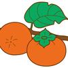 秋が旬の果物「柿」には、医者いらず(?)の健康効果あり