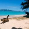 無事に沖縄旅から帰ってきました。