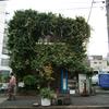 2008年11月5日、SONY α900試写(6)虎ノ門