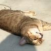 恥ずかしくて突然昇天する猫【のら猫テル坊日記その3】