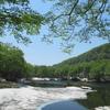 ◆5/21     新緑の鶴間池④ …鶴間池の周りを1周(後半)