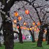 【桜情報2019】駅前すぐの錦糸公園桜まつり / Kinshi Park @錦糸町