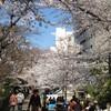 都内「桜」散策 ほんの一部ですが・・・^_^;