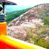 一生に一度は見たい、奈良県吉野山の桜絶景スポット