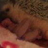 ノーマルの赤ちゃん生まれました。