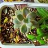 🌵多肉植物   秋の植え替え作業開始🌵