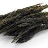 話題のスーパー海藻「アカモク」その驚くべきダイエット効果とは