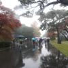 【大嘗宮と乾通りの紅葉】雨だから超余裕で見学できました・前編