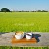 タイの田んぼカフェとレストラン@アーントーン県/Rice Field Cafe Restaurant in Ang Thong Province, Thailand