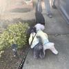 足の続報と久しぶりの黒猫くぅちゃん