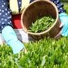 新茶の季節、家のお茶類の整理を行いました